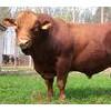 肉驴种驴小驴驹广灵驴德州驴杜泊绵羊奶牛关东驴毛驴