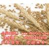 【常年大量收购】玉米玉米皮小麦麸皮次粉等