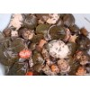 水产网 中国水产网 甲鱼网上的甲鱼苗种还是潢川县众腾水产好