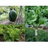 采购高深圳蔬菜就找清渠|龙岗有机蔬菜配送