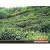 黄山毛峰,绿茶