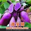 红米红色素 紫甘蓝红色素 紫甘薯红色素 桑葚提取物