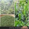 宣城品牌绿茶销售