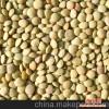 供应2011小扁豆3-5