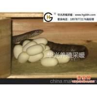 供应华光养蛇保温地暖 养蛇恒温设备 养蛇采暖系统