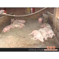 供应暖益康碳纤维地暖发热线 猪舍取暖碳纤维畜牧地暖