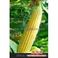 玉米棒子19元/斤(图)
