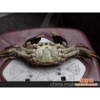 螃蟹(洪湖淡水活鲜)