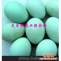 纯系五黑乌鸡苗、绿壳高产蛋鸡苗、及种蛋(图)