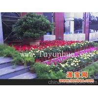 北京五一节日花坛租摆