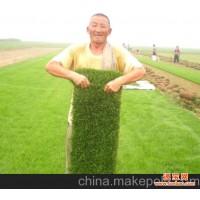 绿色环保草坪阳光天堂绿色环保草坪基地