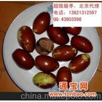 超级脆枣,产地北京,比核桃个儿大
