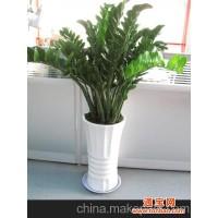 大悦城花卉绿植公司