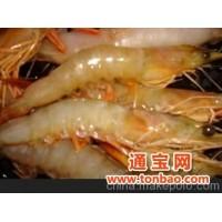 对虾 明虾 浙江宁波 石浦水产