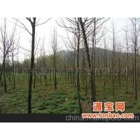 抛售多年乔木各种绿植