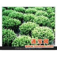 北京苗圃出售苗木 花木 绿化苗木 园林苗圃 苗木基地 花灌木