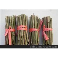 出售各品系优质竹柳 国内低价 正宗苗种 价低质优
