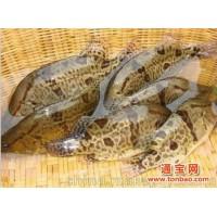 淡水鱼鱼苗批发 桂花鱼苗价格 各种放生鱼苗出售 厂家直销鱼报价