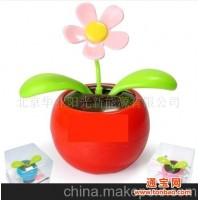 太阳能苹果花