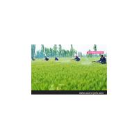 品质保证 现货供应  农药