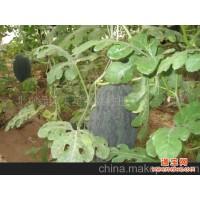 北京绿园天星蔬菜种植专业合作社