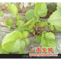 绿富隆有机紫菜苔——品味天然享受健康