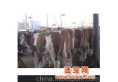 山东梁山畜牧局凤园牧业种牛羊养殖供求基地