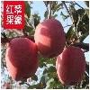 供应重庆优质的红苹果