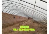 河南温室大棚、开封温室大棚、郑州农博温室