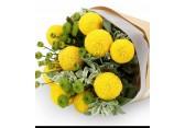 乒乓菊在花艺中的运用,乒乓菊的家居养护要点