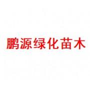 青州市鹏源绿化苗木园艺场