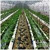 山东优质的采摘园推荐|青州采摘园位置