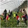 青州采摘园哪家好靠谱的采摘园庙子东山小流域提供