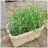 潍坊地区哪里有卖优质阳台蔬菜|家庭阳台适合什么蔬菜