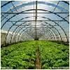 连栋温室建造_山东结实耐用的山东温室大棚