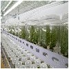 口碑好的组培蓝莓苗优选丹东清禾农林公司|广东组培蓝莓苗厂家