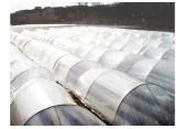 农膜生产厂家批发农用地膜黑色除草膜塑料薄膜大棚膜