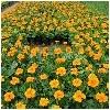 名声好的花卉供应商推荐|各类花卉批发