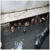 惠州专业的提供赏龟服务服务报——惠州草龟地