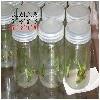 徐州地区好的透气覆膜组培瓶——组培瓶格
