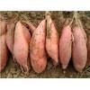 安徽山芋-安徽海涛蔬菜
