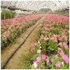 山东喷灌带——信誉好的喷灌带供应商推荐
