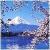 金马国际提供的普工日本服务口碑怎么样全面的普工日本